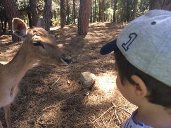 ehi bambi ciao come va?